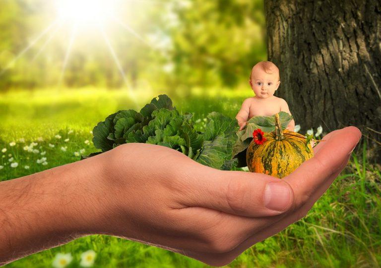 I migliori alimenti per lo sviluppo cerebrale del bambino